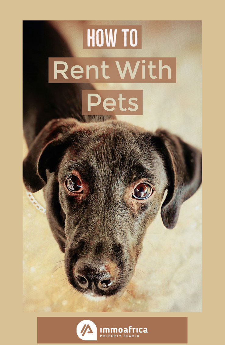 How To Go About Renting With Pets