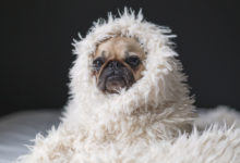 How Do Your Pets Affect The Selling Of Your Property