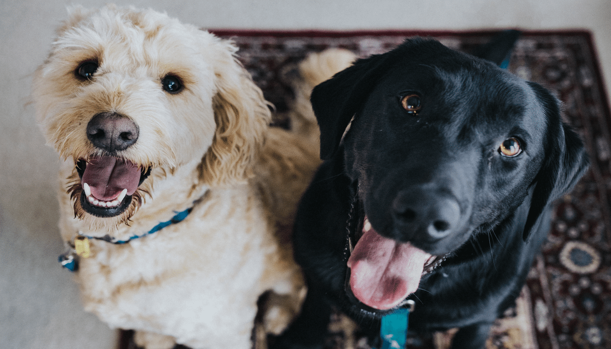 Tips for Buying a Home That Pets Will Love