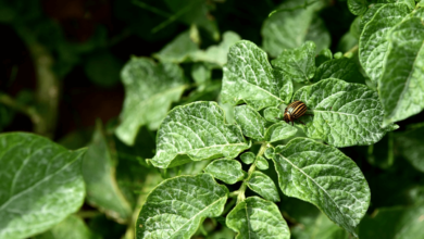 Prevent Garden Pests from Ruining Your Garden