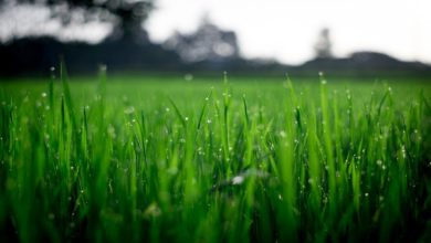 Photo of 5 Tips to Prepare Your Lawn For Warmer Seasons