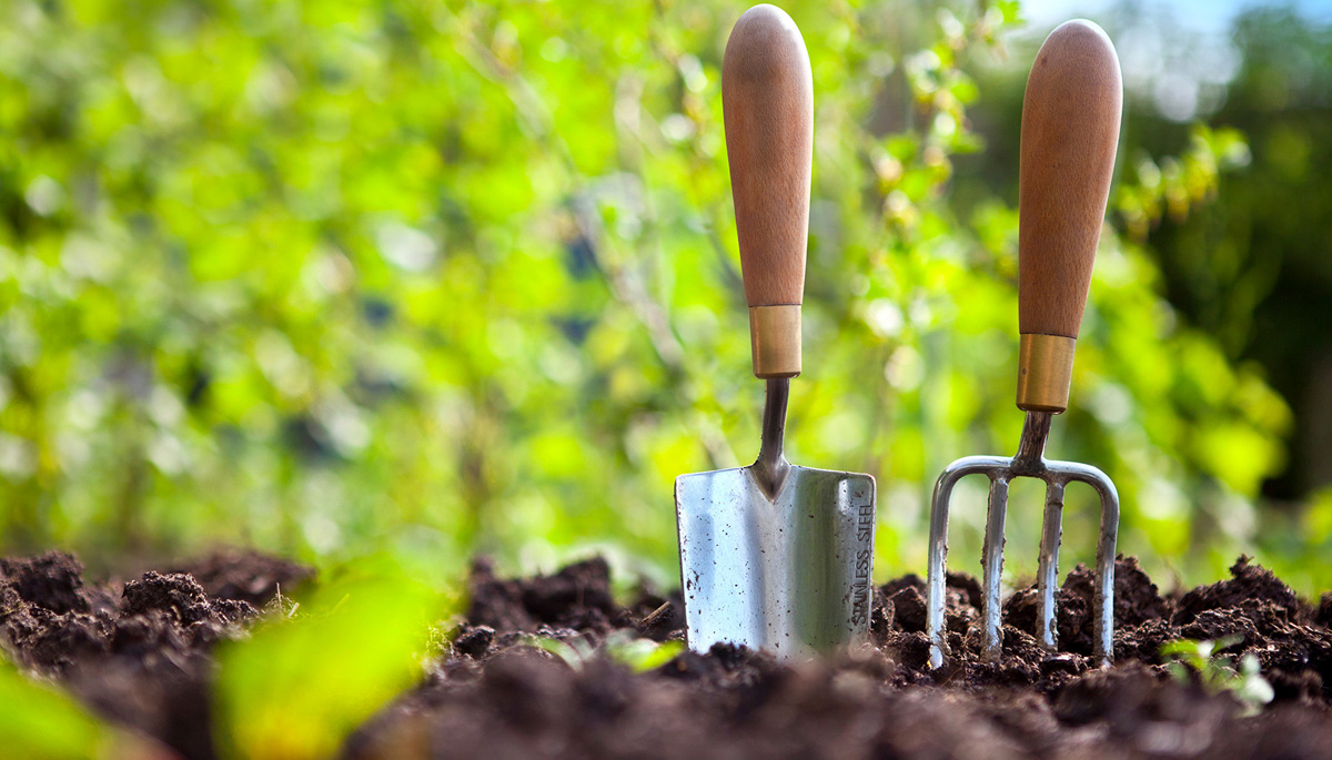 What to Know If You Are a Novice Gardener