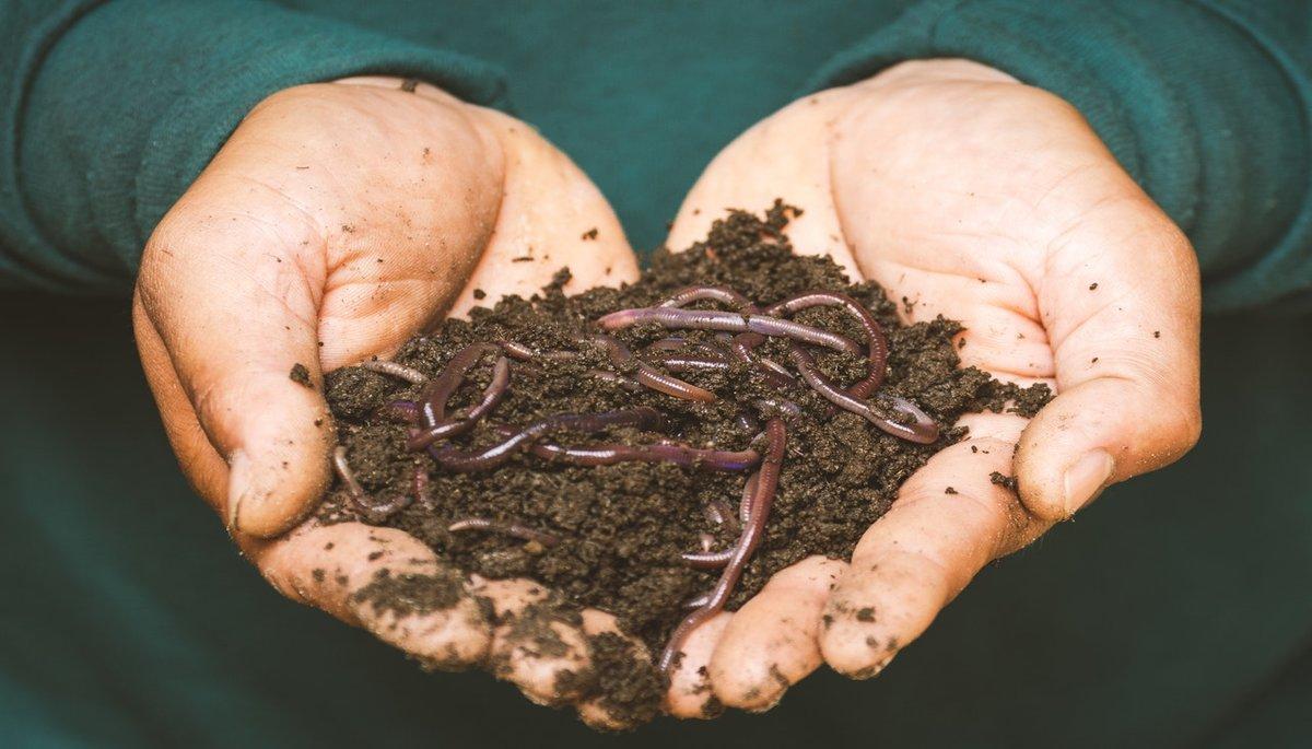 Natural DIY Fertilizers Garden Yard