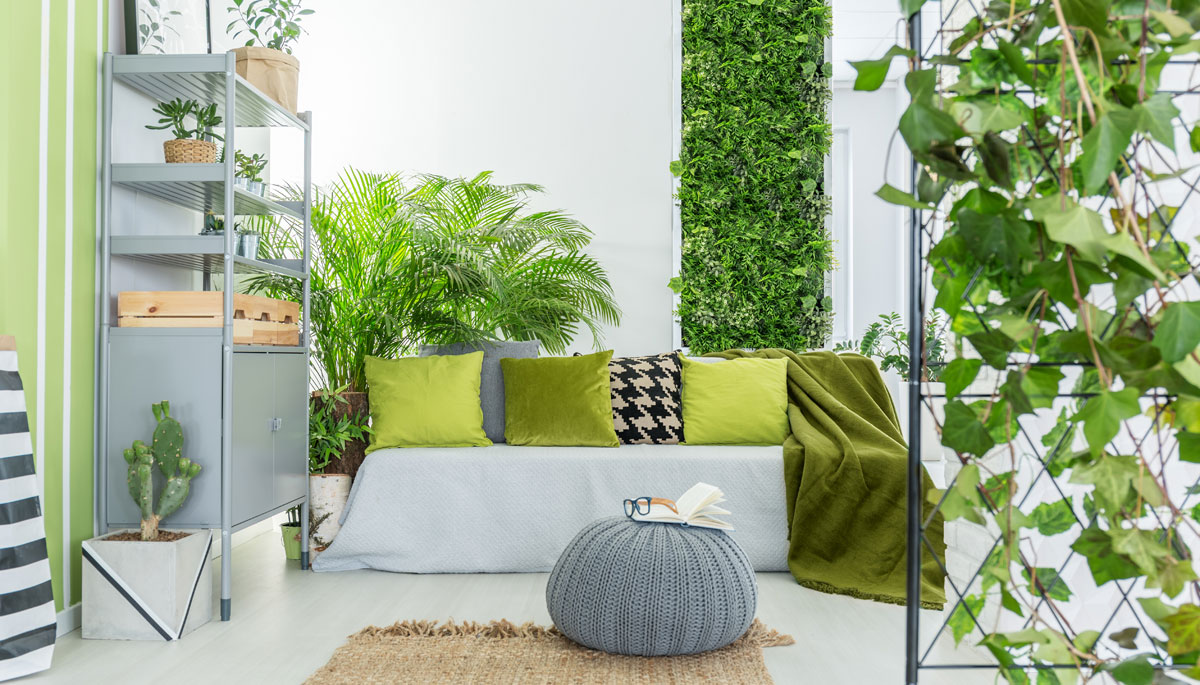 Why We Need Plants in Our Homes