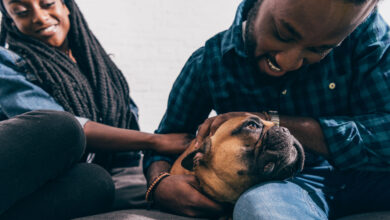 Tips for Renting with Pets