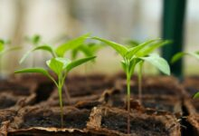 Growing Food In Small Space